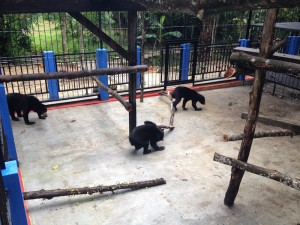 Fitri, Rina and Brutus in new cage