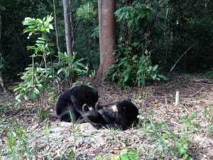 Jay and Kumala in Enclosure A