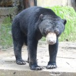 Teagan - Sun Bear at WRC