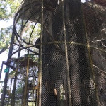 WRC - new cage for the macaques